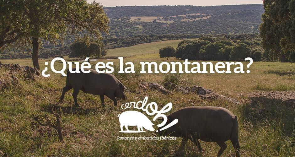 """La Montanera, esa vida a """"cuerpo de rey"""" de los cerdos ibéricos."""