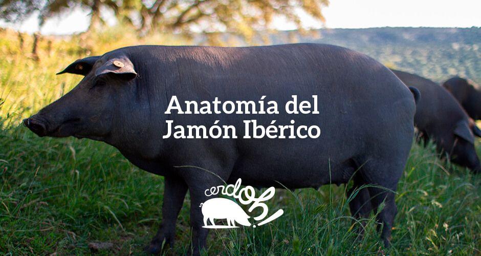 La anatomía del jamón ibérico | Cerdoh! 100% Ibéricos de Bellota